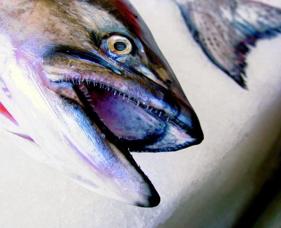 alergia al pescado 2