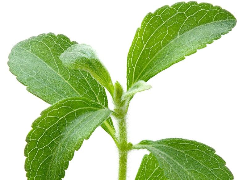 hojas de estevia